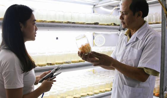 Cơ sở sản xuất đông trùng hạ thảo thành công đầu tiên ở Điện Biên
