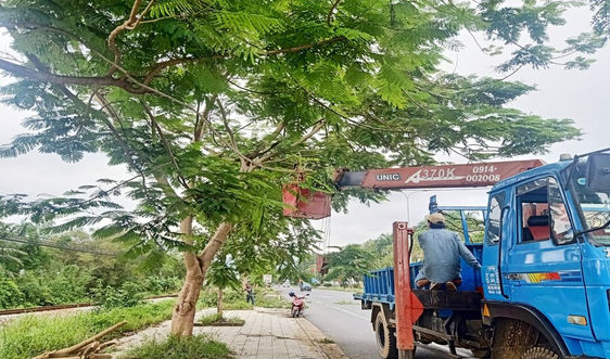 """Bảo vệ hệ thống cây xanh Phú Lộc trước """"cuồng phong"""" số 9"""