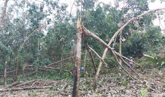 Huyện miền núi Nam Đông (Thừa Thiên Huế) thiệt hại nặng nề sau bão số 9
