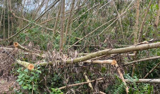 Quảng Ngãi: Khẩn trương khắc phục thiệt hại về rừng do thiên tai gây ra