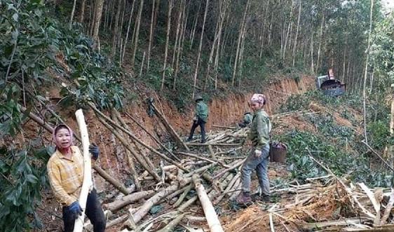 Nghệ An: Thu hồi gần 12 nghìn ha đất của 11 công ty nông, lâm nghiệp