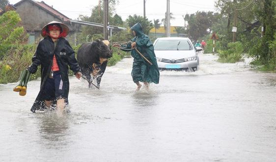 Bão số 12 đi vào tỉnh Phú Yên làm 1 người mất tích, 1 người bị thương