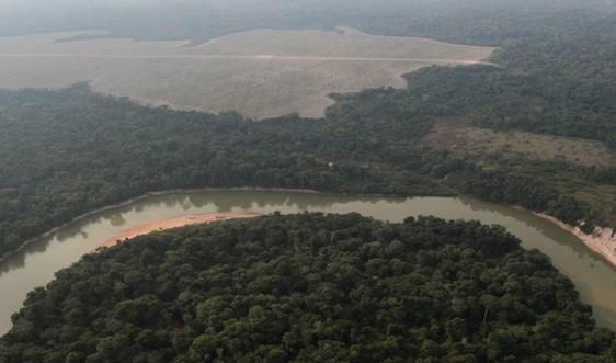 Nạn phá rừng Amazon của Brazil tăng mạnh