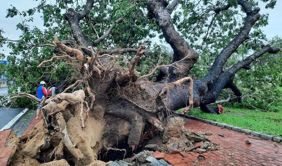 Những hình ảnh thiệt hại ban đầu do bão số 13 tại Thừa Thiên Huế