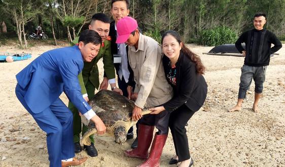 Quảng Ninh: Thả cá thể rùa biển nặng 56 kg về môi trường tự nhiên
