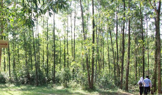 Thừa Thiên Huế: Nhiều kết quả tích cực từ dự án Trường Sơn Xanh