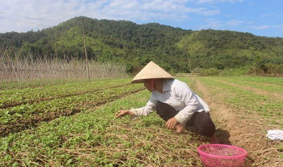 Huyện Điện Biên: Phát huy hiệu quả công tác quản lý đất đai