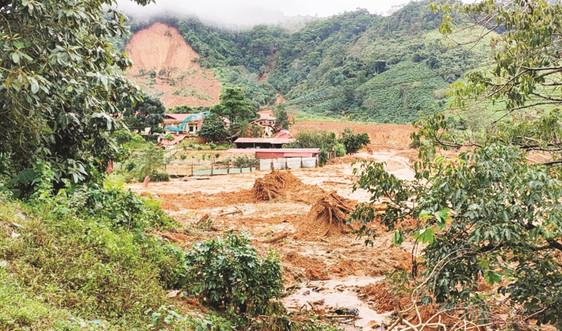 Cấp bách khôi phục rừng bị thiệt hại do thiên tai