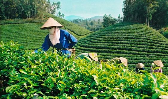 Đất nông lâm trường: Cần xác định cơ chế tài chính đối với phần diện tích các công ty nông, lâm nghiệp giữ lại