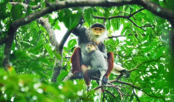 Đà Nẵng: Thêm nguồn lực bảo tồn đa dạng sinh học và bảo vệ môi trường bền vững