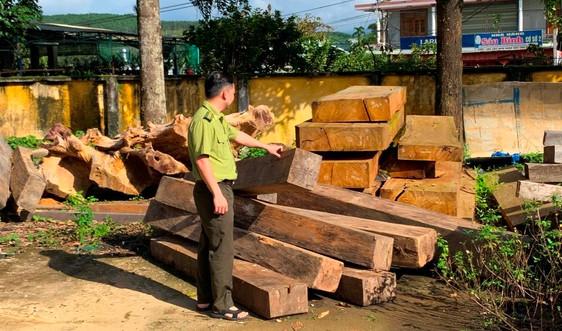 Báo động nạn phá rừng ở Phước Sơn, Quảng Nam