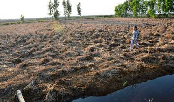 Cảnh báo sớm tính bất thường thời tiết mùa khô năm 2020 - 2021 ở ĐBSCL