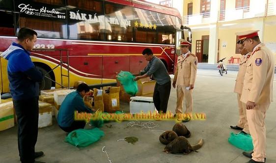 Ninh Bình: Bắt giữ xe khách vận chuyển động vật hoang dã