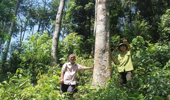 Thanh Hóa: Hiệu quả từ việc chi trả tiền dịch vụ môi trường rừng