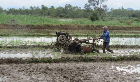 Bình Định: Vụ Đông Xuân trở lại trên cánh đồng Vĩnh Thạnh sau những ngày mưa lũ