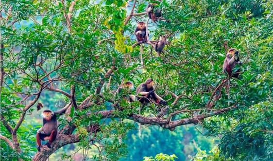 Đà Nẵng: Quyết sách lớn để giữ gìn và phát huy đa dạng sinh học