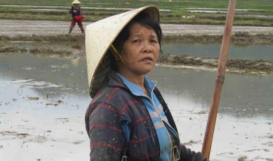 Bình Định: Những cánh đồng mới trên đất Hoài Ân sau mưa bão