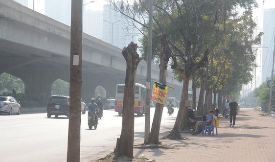 Hà Nội: Cây xanh bị chết khô trên nhiều tuyến phố