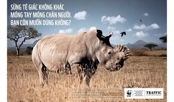 Phải thay đổi niềm tin lạc hậu về sừng tê giác!