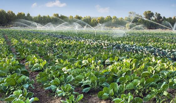 Tưới thông minh - tiết kiệm nước: Giải pháp cho cây trồng vùng khô hạn nặng
