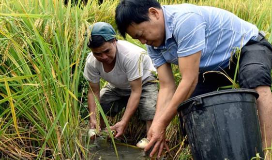 Nhân rộng chuỗi giá trị nông nghiệp thích ứng BĐKH