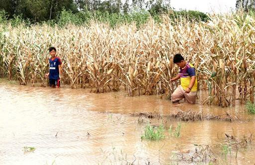 Nâng sức chống chịu khí hậu và tạo sinh kế bền vững