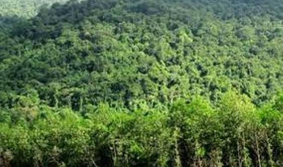 Nghiên cứu cơ chế áp dụng chỉ số môi trường rừng