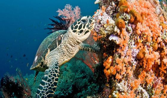 Liên Hợp Quốc cảnh báo các rạn san hô có thể biến mất vào cuối thế kỷ