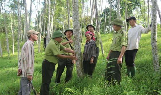 Hiệu quả từ chuỗi liên kết sản xuất lâm nghiệp tại Lào Cai
