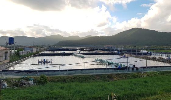 TX. Nghi Sơn: Khai thác và nuôi trồng thủy sản đạt hơn 37 nghìn tấn trong năm 2020