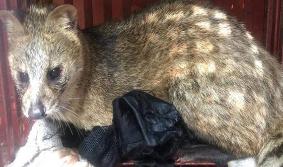 Lạng Sơn: Chỉ đạo siết chặt việc bảo tồn đa dạng sinh học và các loài vật hoang dã