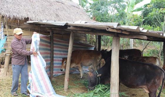 Sơn La chủ động phòng chống rét cho đàn vật nuôi