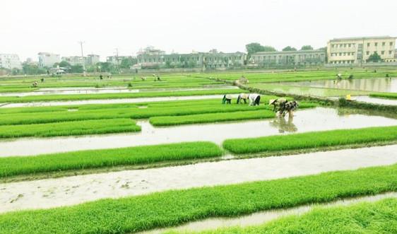 EVN sẵn sàng phục vụ xả nước đổ ải vụ Đông Xuân 2021