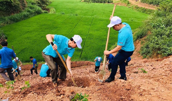 Sơn La dự kiến trồng 30.000 cây phân tán dịp Tết Nguyên đán 2021