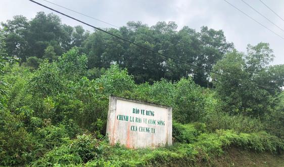 Thái Nguyên tăng cường quản lý bảo vệ rừng