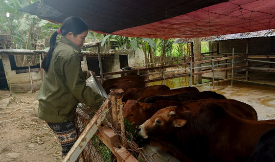 Lai Châu: Chủ động các giải pháp phòng chống rét đậm, rét hại