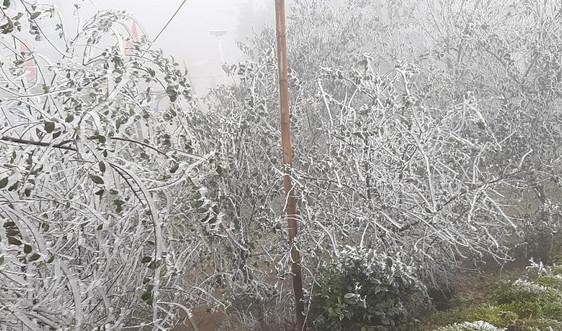 Vùng cao Bắc Yên xuất hiện băng giá