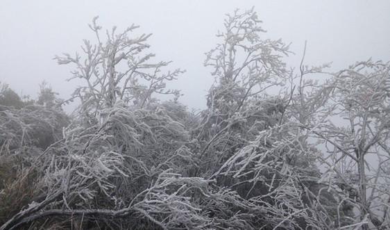 Dự báo thời tiết ngày 12/1: Miền Bắc tiếp tục rét đậm, rét hại