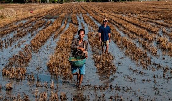 Thích ứng biến đổi khí hậu: Bước tiến của Việt Nam