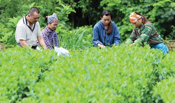 Lạng Sơn: 5.860 hộ gia đình vùng DTTS và miền núi thoát nghèo bền vững