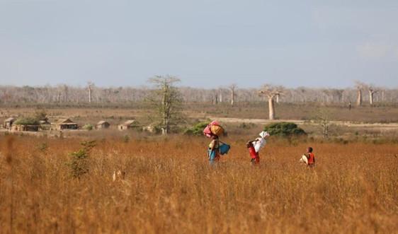 Gần 1,4 triệu người ở Madagascar cần viện trợ lương thực do hạn hán