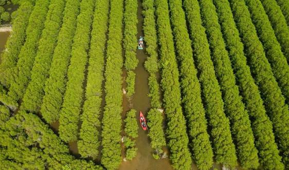 """Quảng Ngãi: Nhân lên những """"con đê xanh"""" của làng"""