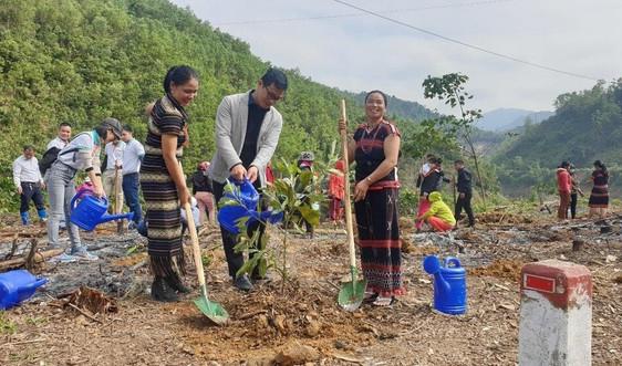 Quảng Nam trồng 11.000 cây góp quỹ một tỷ cây xanh
