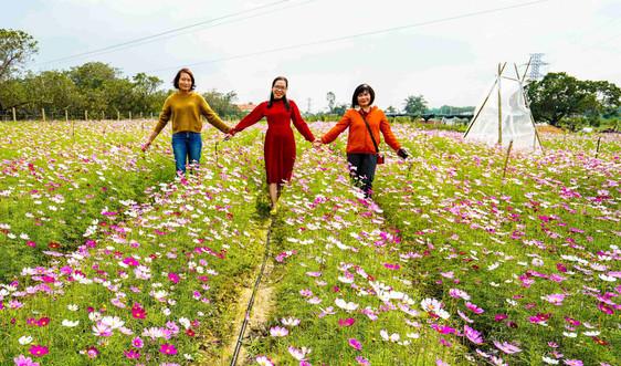 Loài hoa xứ Tây Bắc mọc trên đất cát Bình Định