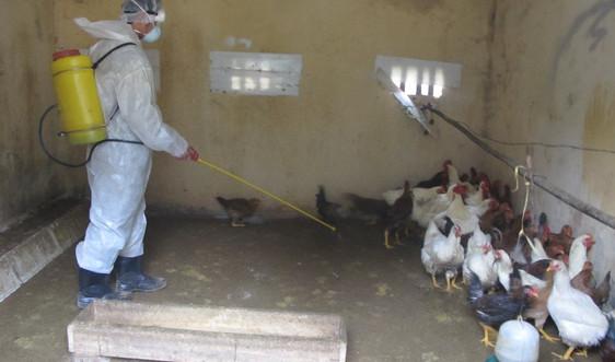 Lai Châu: Quyết liệt phòng, chống bệnh Cúm gia cầm và vận chuyển động vật, sản phẩm động vật qua biên giới