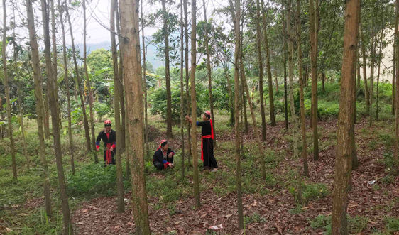 Vì sao Đề án giao đất, giao rừng tại Quảng Ninh chậm tiến độ?
