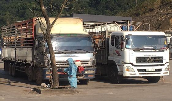 Quảng Bình: Tăng cường kiểm soát, ngăn chặn hoạt động vận chuyển trái phép lợn, sản phẩm từ lợn qua biên giới