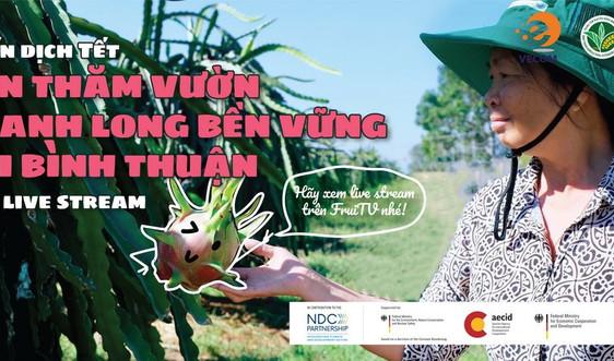 Tết Tân Sửu:  Nông dân Bình Thuận thử nghiệm bán thanh long sạch qua live stream