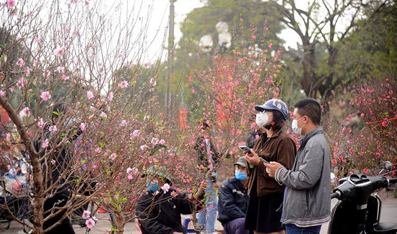 Thưa vắng chợ hoa lớn nhất Thủ đô ngày cận Tết Tân Sửu