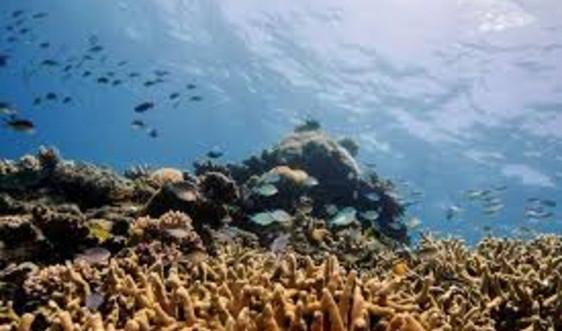 Ô nhiễm tiếng ồn phá hủy đời sống sinh vật biển